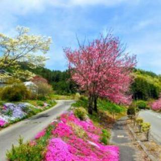 美しい風景や草花を撮影しながら、Let'sサイクリング!