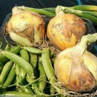 野菜栽培士が育てた 無農薬有機栽培 野菜セット