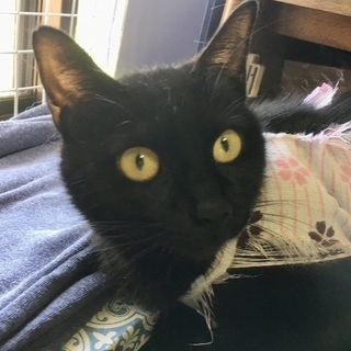 交渉中です☆とっても甘えん坊の黒猫ちゃん♀