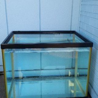 商談中です。ガラスの60cmワイド水槽です