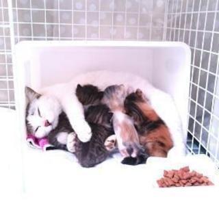 【中断】子猫の里親さん探してます!
