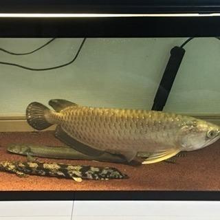 魚類販売(熱帯魚 古代魚)