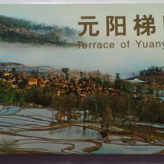 写真(絵)はがきです。中国雲南省元陽:棚田 今は世界遺産です