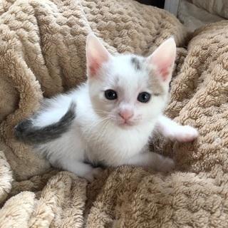 生後40日の仔猫の里親さまを探してます