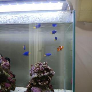 海水魚、熱帯魚、3~4cm程度の小型魚です。