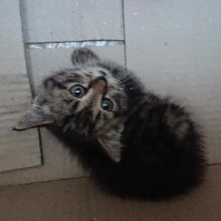 西尾張で猫の里親募集中!!