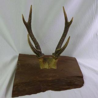 値下げ 鹿の角 壁掛け 高さ約35cm オブジェ インテリアに