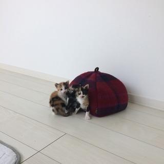 4月7日生まれの子猫たちの里親募集中