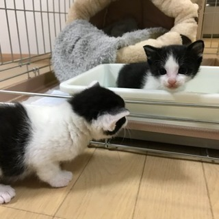 保護猫ちゃんの里親募集