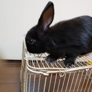 ウサギの子供。可愛がって下さい