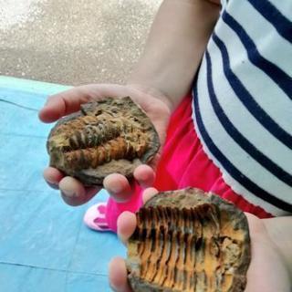 夏休みイベントに!出張で化石発掘&宝石発掘体験イベントやってます🦖