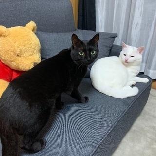 1歳のオス猫達