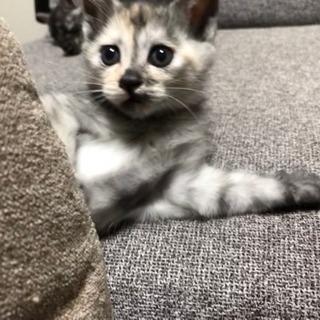 生後2ヶ月の子猫たち3匹