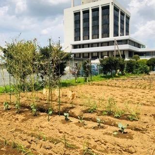 千葉県袖ヶ浦駅から徒歩3分のレンタル農園!シェア畑でお野菜作って...