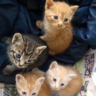 【募集終了】畑の端で生まれた子猫