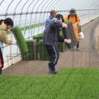 【女性向け高時給/田植え補助作業】☆☆☆前払い制度有