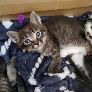 有り難うございましたm(__)m5月18日写真更新!!4/10生まれの子猫2匹里親様募集(^^)♂は里親様決定しました! - 猫