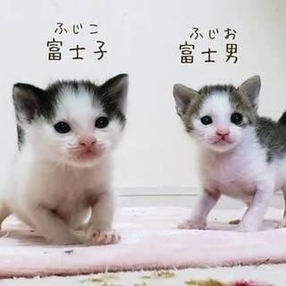 愛知県動物管理センター引き出しの♀♂