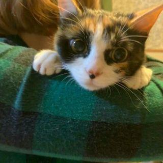 可愛い仔猫の里親さんを探しています