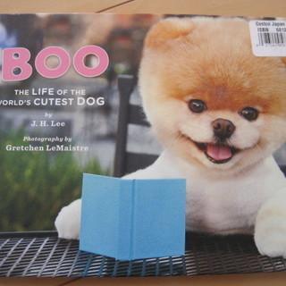 可愛い子犬絵本 英語