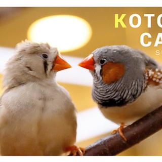 小鳥カフェ巣鴨でハコニワジオラマワークショップ開催。 − 東京都