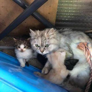 生後2ヶ月くらいのオス子猫一匹