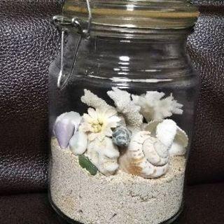 貝殻テラリウム