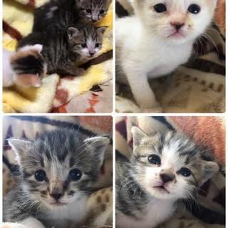 母猫さんの命を引き継いだ3兄弟