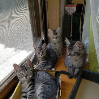 生後2ヶ月可愛い子猫たち(休止中)