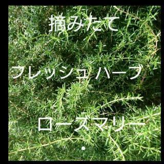 ローズマリー切り枝