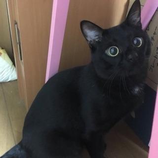 急募!!3歳3ヶ月の元気な黒猫の里親募集🐈🐈 - 朝倉郡