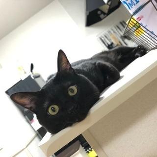 急募!!3歳3ヶ月の元気な黒猫の里親募集🐈🐈 − 福岡県
