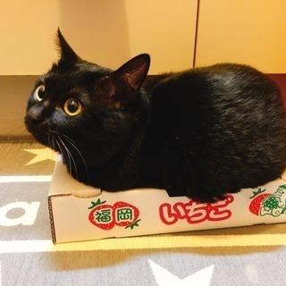 急募!!3歳3ヶ月の元気な黒猫の里親募集🐈🐈 - 里親募集