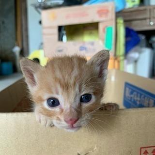 かわいい子猫❤️生後1カ月くらい
