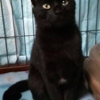 甘えたがり❓美人黒猫 令ちゃん