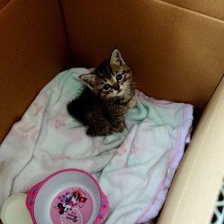 保護した子猫です。里親決まりました。ありがとうございます。