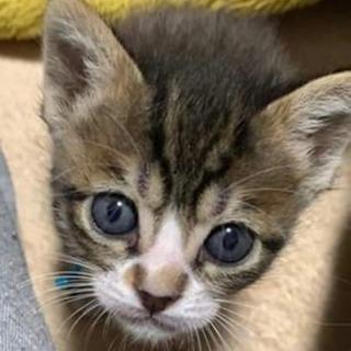 カミーユちゃん 2ヶ月 子猫