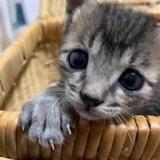 バスク君 子猫 2ヶ月