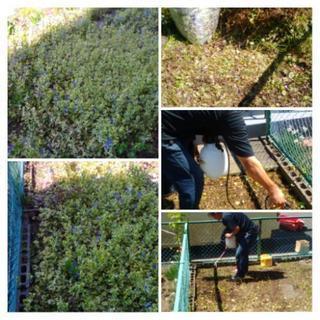 草むしり&除草剤散布など 札幌市 便利屋タクミ