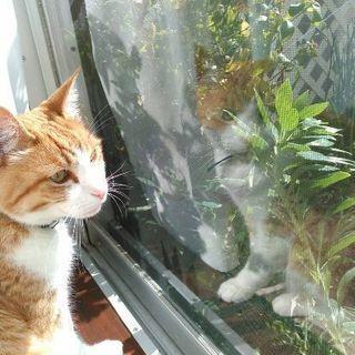 甘えん坊のトラ猫