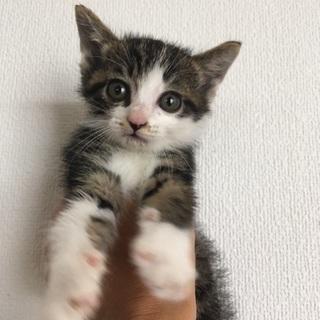 生後1ヶ月未満の子猫