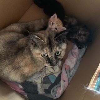 親猫、仔猫2匹。飼って下さる方!至急。(只今話合い中