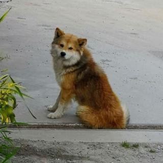 【切実】幼犬・成犬の里親様を募集しています