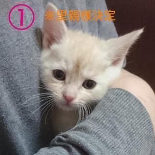 子猫 ※面会希望多数のため全て子の募集一時停止