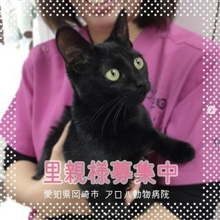 【里親募集】わんぱくで元気な黒猫の女の子