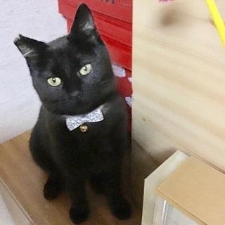 黒猫のチビちゃん2匹います