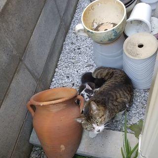 地域猫の里親募集します