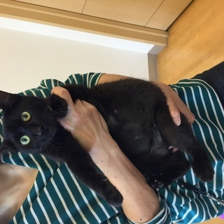 里親様決まりました。だっこできる黒猫ちゃん。 - 熊本市