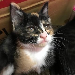 生後2ヶ月の子猫です。5匹とも里親さんに引き取られました!