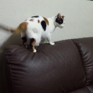 人懐っこい猫です